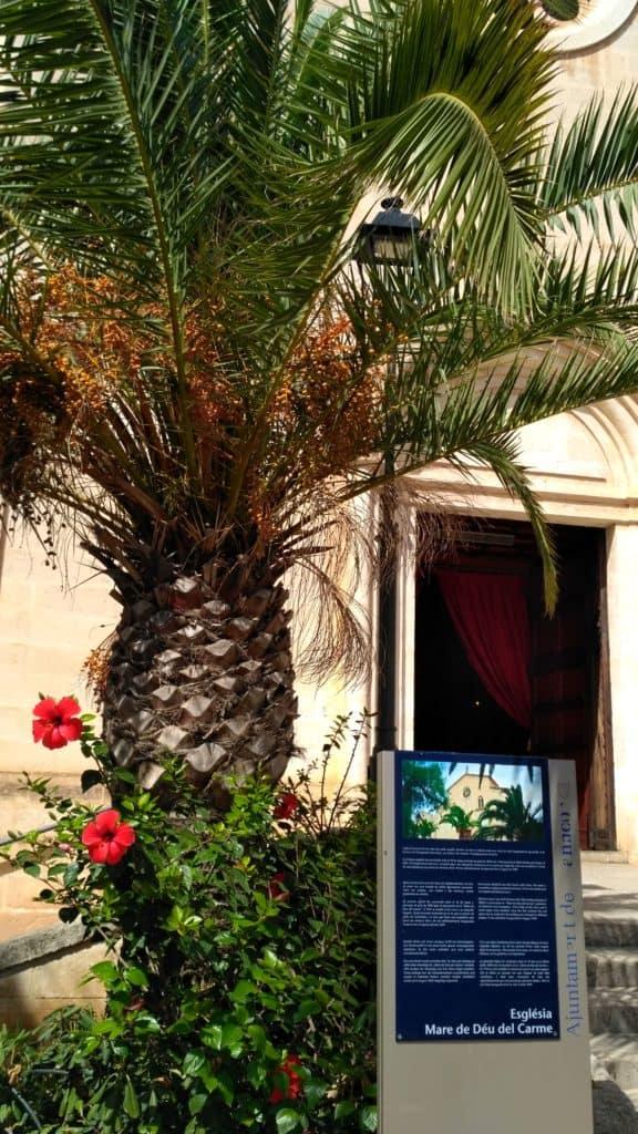 palma i czerwone oleandry